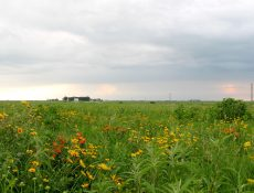 Red and yellow wildflowers at Kalsow Prairie