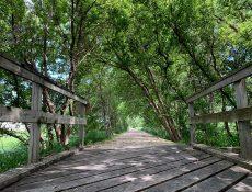 Wooden bridge on Laurens Prairie Preservation Trail
