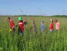 Kids walking through tall prairie grass