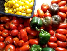 Assorted tomatoes and peppers