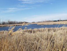 Creek and long grass